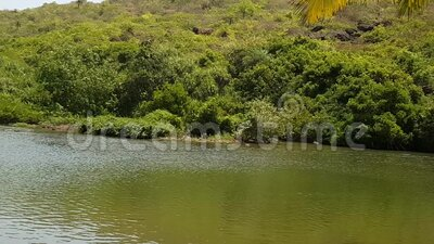 Γραφική πράσινη γωνία της φύσης, φύλλα φοίνικα κρεμασμένα στη λίμνη περιτριγυρισμένα από την πράσινη ζούγκλα απόθεμα βίντεο
