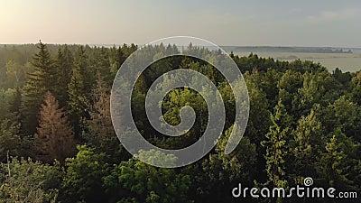 Δάσος με κωνοφόρα και φυλλοβόλα δένδρα με πράσινες και καφέ ξηρές φυτείες Όμορφη φύση την αυγή απόθεμα βίντεο