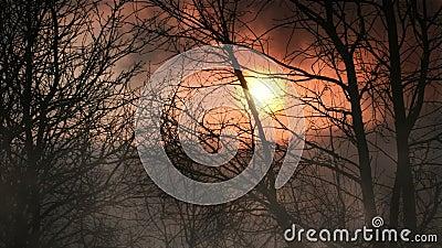 Δάσος στο σούρουπο με τον άνευ ραφής βρόχο ομίχλης απόθεμα βίντεο