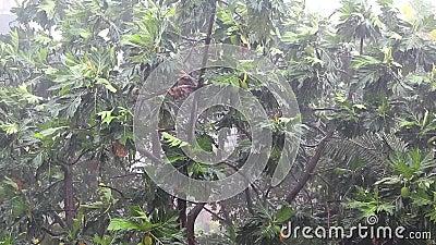 Δέντρα και χύνοντας βροχή downpour τροπικό απόθεμα βίντεο