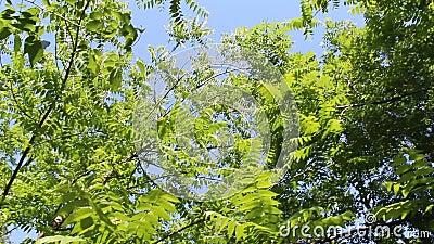 Δέντρα στο δάσος σε ένα θυελλώδες μήκος σε πόδηα ημέρας απόθεμα βίντεο