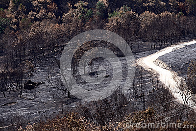 Δασική άγρια πυρκαγιά