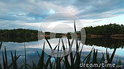 Δασικό πανόραμα άποψης λιμνών απόθεμα βίντεο