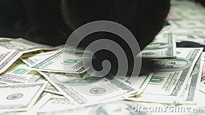 Δολάριο και μια μαύρη γάτα φιλμ μικρού μήκους