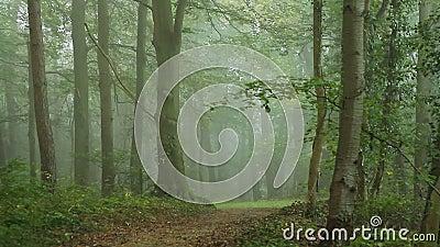 Δρόμος στο δάσος απόθεμα βίντεο