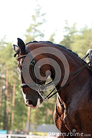 εκπαίδευση αλόγου σε π&