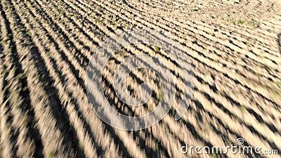 Εναέρια άποψη καλλιεργήσιμου εδάφους με τον οργωμένοι τομέα και furrows που σύρουν την ξηρά γη απόθεμα βίντεο