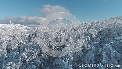 Εναέριος Flyover ηλιόλουστος χιονισμένος δασικός πυροβολισμός δέντρων βουνών τοπ χιονώδης αειθαλής Εναέρια άποψη των δέντρων που  απόθεμα βίντεο