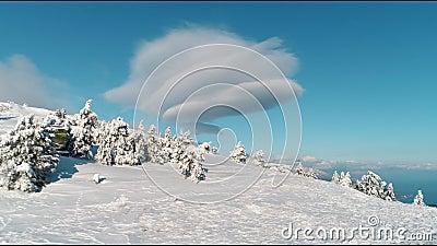 Εναέριος Flyover ηλιόλουστος χιονισμένος δασικός πυροβολισμός δέντρων βουνών τοπ χιονώδης αειθαλής Εναέρια άποψη των δέντρων που  φιλμ μικρού μήκους