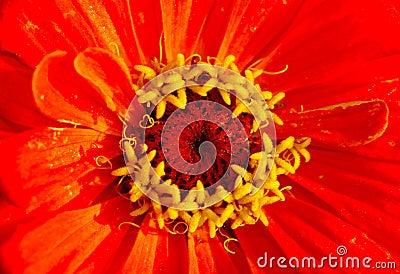 εξωτικό λουλούδι