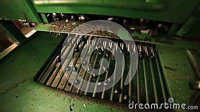 Εργοστάσιο ελιών απόθεμα βίντεο