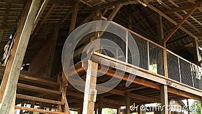Εσωτερική στέγη του βιρμανός σπιτιού ξυλοποδάρων, το Μιανμάρ απόθεμα βίντεο