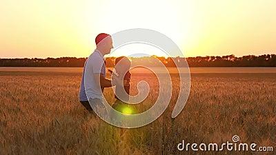 Ευτυχής οικογένεια: παιχνίδι πατέρων και γιων σε έναν τομέα σίτου στο ηλιοβασίλεμα Τρεξίματα χαριτωμένα μικρών παιδιών στον μπαμπ φιλμ μικρού μήκους