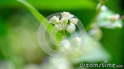 Ευώδη λουλούδια στο μακρο τρόπο φιλμ μικρού μήκους