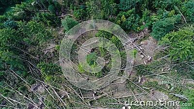 Ζημία θύελλας, δάσος φιλμ μικρού μήκους
