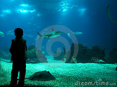 ζωή υποβρύχια