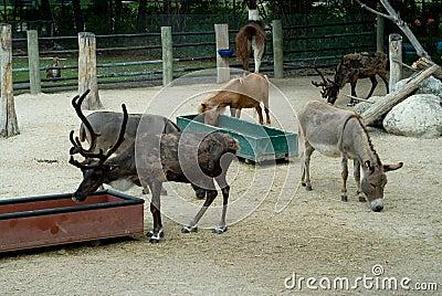 ζωολογικός κήπος ζώων