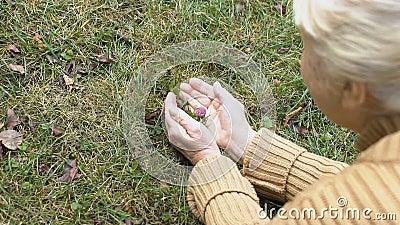 Ηλικιωμένες γυναίκες που θαυμάζουν το λουλούδι στο αγρό, φροντίζοντας τη φύση, την οικολογία φιλμ μικρού μήκους