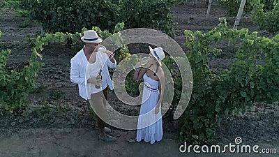 Η αγροτική αγάπη, εναέρια άποψη σχετικά με το ζεύγος winemaker πίνει το κρασί στον αμπελώνα από τα glassess υπαίθρια απόθεμα βίντεο