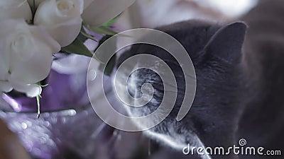 Η γάτα μασά τα λουλούδια στο γαμήλιο πίνακα απόθεμα βίντεο