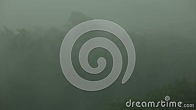 Η δυνατή βροχή και ο αέρας τινάζουν τα δέντρα τυφώνας απόθεμα βίντεο