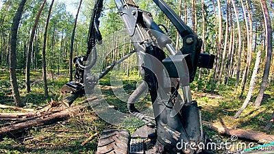 Η μηχανή εργασίας κόβει δέντρα στα δάση απόθεμα βίντεο