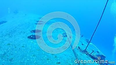 Θαλάσσια αλιεία Νήσος Μποναίρ απόθεμα βίντεο