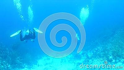 Θαλάσσια αλιεία Νήσος Μποναίρ φιλμ μικρού μήκους