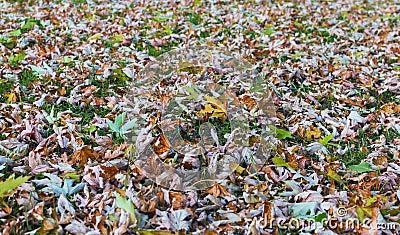 Θερινά φύλλα
