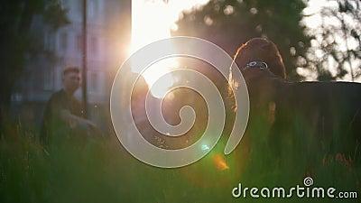 Ιρλανδικός ρυθμιστής φυλής σκυλιών που εξετάζει γύρω μπροστά από τη νέα συνεδρίαση ζευγών στη χλόη το θερινό ηλιοβασίλεμα φιλμ μικρού μήκους