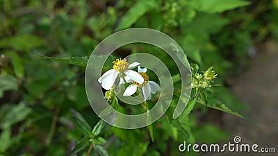 Κήπος από μαργαρίτα λουλουδιών στο πλάι φιλμ μικρού μήκους