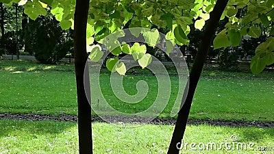 Κήπος στο πάρκο - φύλλα στο αεράκι απόθεμα βίντεο
