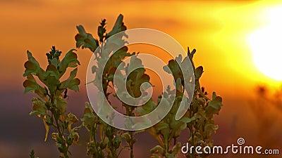 Κίτρινα λουλούδια και μυρμήγκι στην ανατολή φιλμ μικρού μήκους