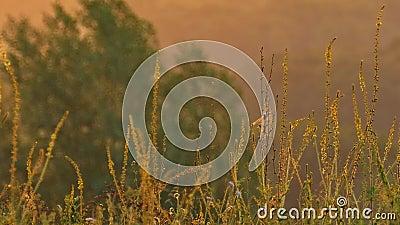 Κίτρινα λουλούδια σε έναν λόφο που ταλαντεύεται από το αεράκι πρωινού φιλμ μικρού μήκους
