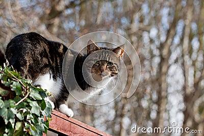 Καθαρό αρπακτικό ζώο - εσωτερική γάτα