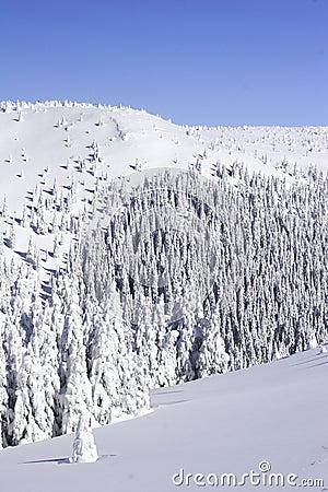 καλυμμένο δασικό χιόνι πεύκων