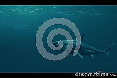 Καρχαρίας απόθεμα βίντεο