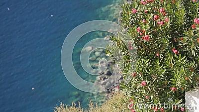 Καταπληκτική ακτή που διακοσμείται από τα όμορφα εξωτικά λουλούδια, παράδεισος στη γη απόθεμα βίντεο