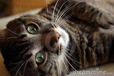 κοίταγμα γατών