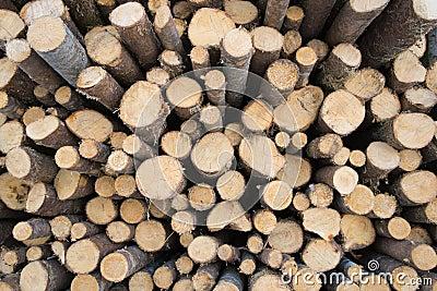 Κομψό ξύλο κούτσουρων