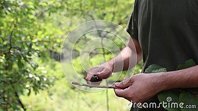 Κοπή και πριονίδια δέντρου με μαχαίρι απόθεμα βίντεο