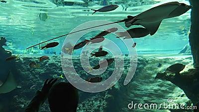 Κόσμος των ψαριών, επισκεμμένο αγόρι θαλάσσιο πάρκο με το ενυδρείο περίπλοκος-ψαριών συνολικά απόθεμα βίντεο