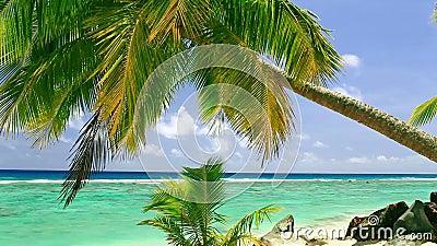 Κύματα σε μια τροπική παραλία
