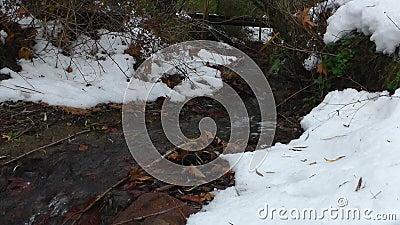 Λίγος χιονώδης κολπίσκος φιλμ μικρού μήκους