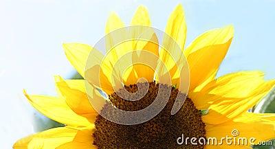 λουλούδι μισό