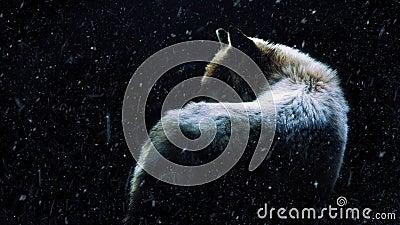 Λύκος στο σκοτεινό δάσος με την πτώση χιονιού φιλμ μικρού μήκους