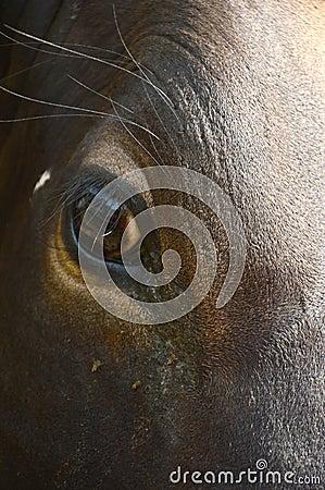 Μάτι αγελάδων