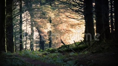 Μαγική ανατολή στο δάσος φιλμ μικρού μήκους