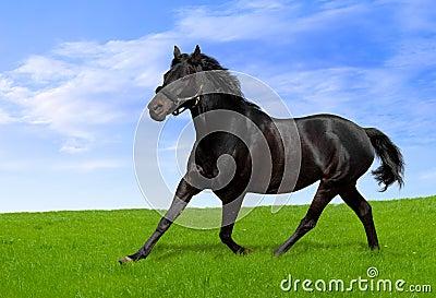 μαύρο άλογο