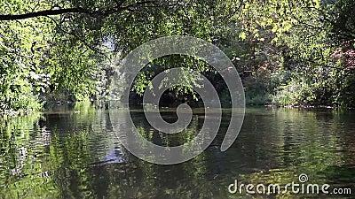 Μια χαλαρωτική φωτογραφία ενός ρέματος που τρέχει κατά μήκος του δασικού τοπίου με τα δέντρα φιλμ μικρού μήκους
